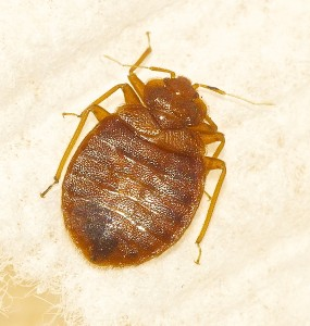 Bed Bug Control, bed bug treatment plan, bed bug extermination