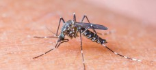 Preferred Pest Control in Savannah GA - Mosquito Pest Removal