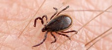 Savannah GA Pest Control - Tick