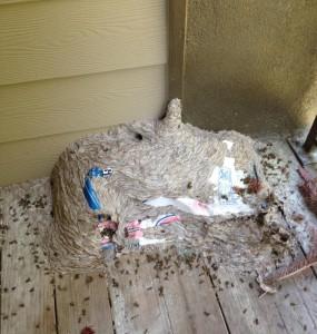 Savannah pest control