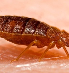 bed bug control company